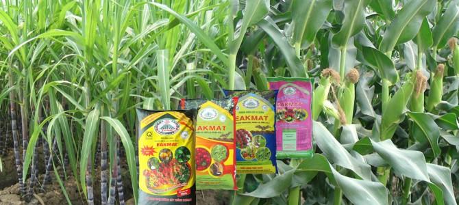 Phân bón hữu cơ góp phần phát triển nông nghiệp sạch