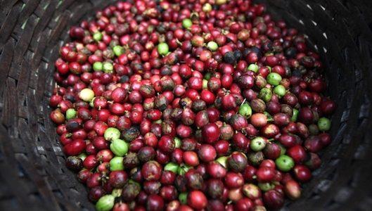 Giá cả thị trường nông sản hôm nay 15/10: Giá tiêu, giá cà phê ổn định