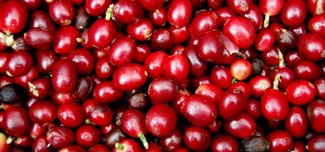 Giá nông sản hôm nay 14/6: Giá cà phê giảm dưới mức 35.000 đồng/kg, giá tiêu đứng yên