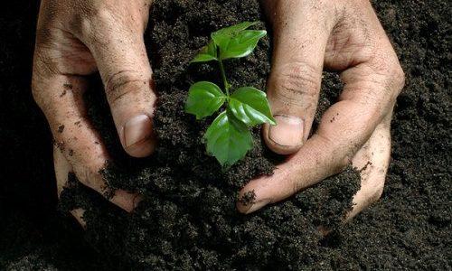 Kỹ thuật bón thúc bón lót cho cây trồng đạt năng suất cao